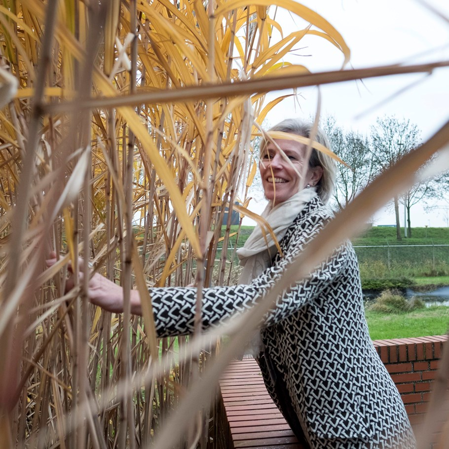 Petra Koenders at the elephant grass on the Green Chemistry Campus Brabant Brand Box